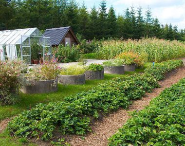 High-beds-garden-farmiing